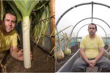 Potret kebun sayuran raksasa ini dijamin bikin ibu-ibu bengong