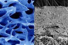 Penampakan 9 bagian tubuh dilihat pakai mikroskop, ngeri gimana gitu