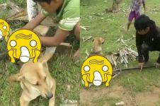 Selamatkan anjing dari lilitan ular, aksi 3 bocah ini tak terduga