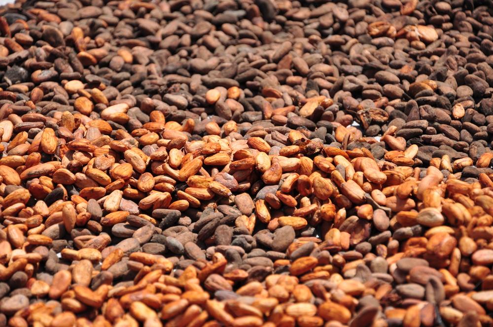 cokelat indonesia Istimewa
