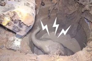 Induk gajah ini menangis saat bayinya jatuh ke sumur sedalam 3 meter