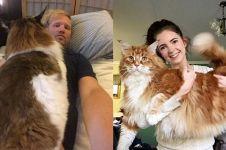 5 Potret kucing raksasa ini bikin heboh, ada yang segede manusia