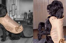 Baju anjing ini harganya Rp 1,9 miliar, ini keistimewaannya
