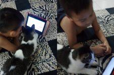 Bocah ini ajari kucing main gadget, endingnya bikin nyesek