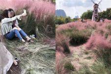 Rumput pink ini tumbuhnya 3 tahun, rusak gara-gara selfie dalam 3 hari