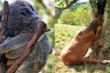 12 Pose hewan saat tidur di pohon ini bikin gemes