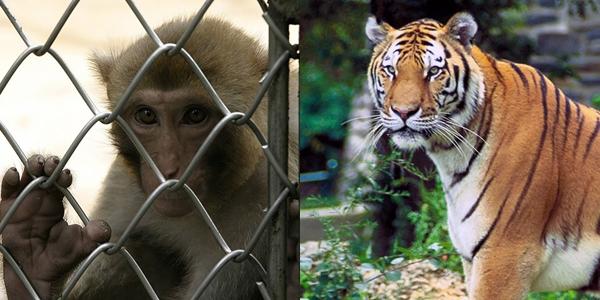 5 Tragedi di kebun binatang di Indonesia, memakan korban jiwa