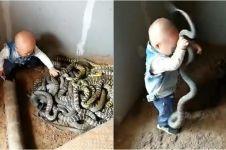 Punya ayah hobi ternak ular, kebiasaan balita ini bikin ngeri sendiri