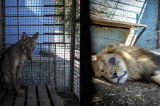 9 Potret kebun binatang berjuluk nerakanya safari, miris banget