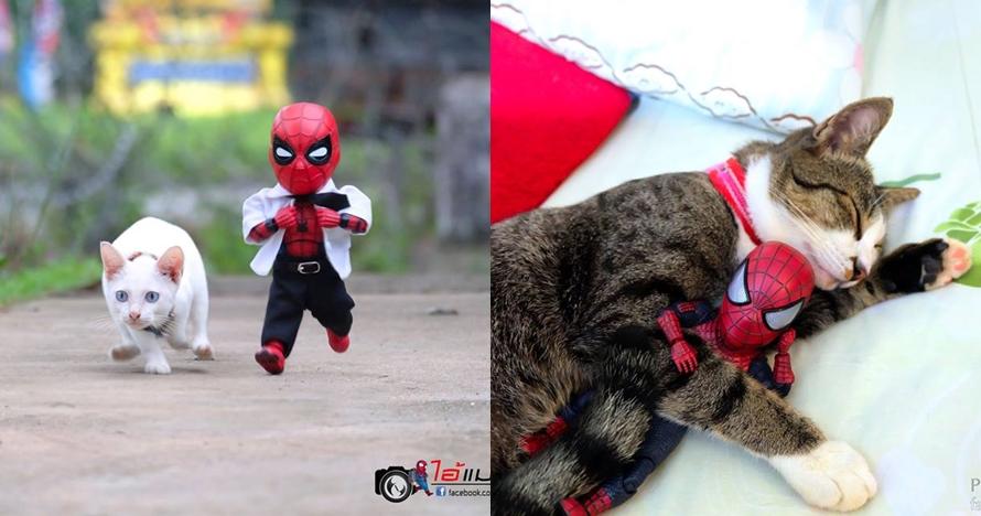 10 Potret jika Spider-Man sahabatan sama kucing ini kocak pol