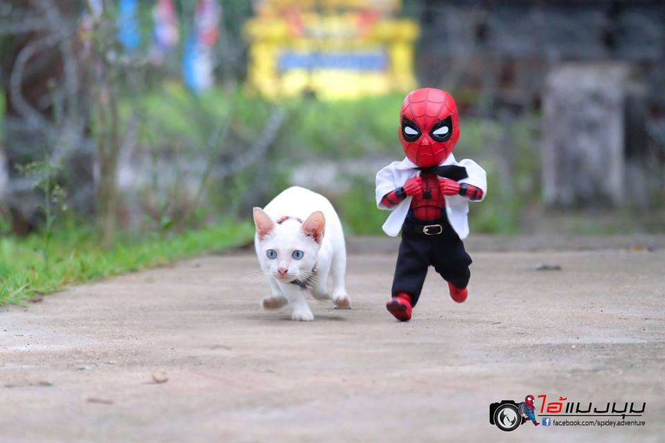 spiderman dan kucing © 2018 facebook