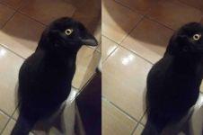 Foto ilusi optik ini bikin bingung, kucing atau burung gagak?