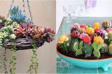 30 Inspirasi kaktus & sukulen hias terunik untuk percantik rumah