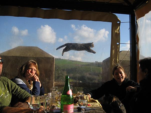 kucing rusak foto © 2018 brilio.net
