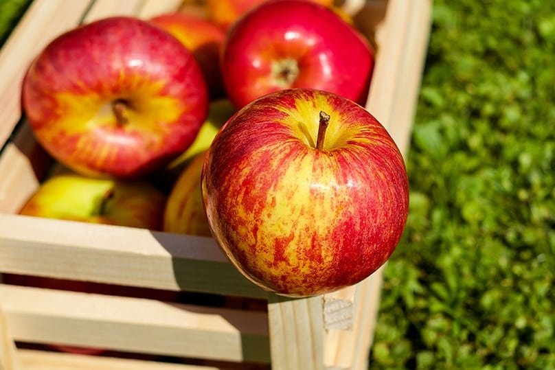 20 Makanan enak dan murah yang bikin kulit mulus istimewa