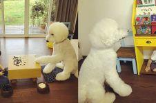 12 Foto anjing lucu temani anak kecil ini bikin gemas