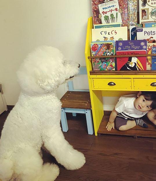 tingkah lucu anjing jepang temani anak kecil instagram