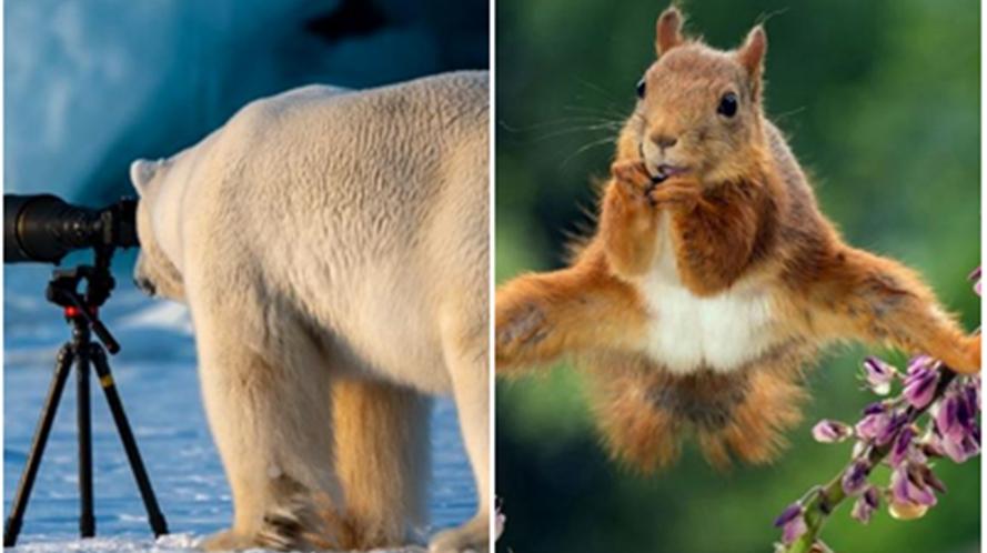 10 Juara kontes foto Comedy Wildlife, ungkap sisi kocak hewan liar