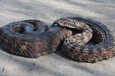 15 Patung hewan dari besi berkarat ini keren abis, mirip aslinya