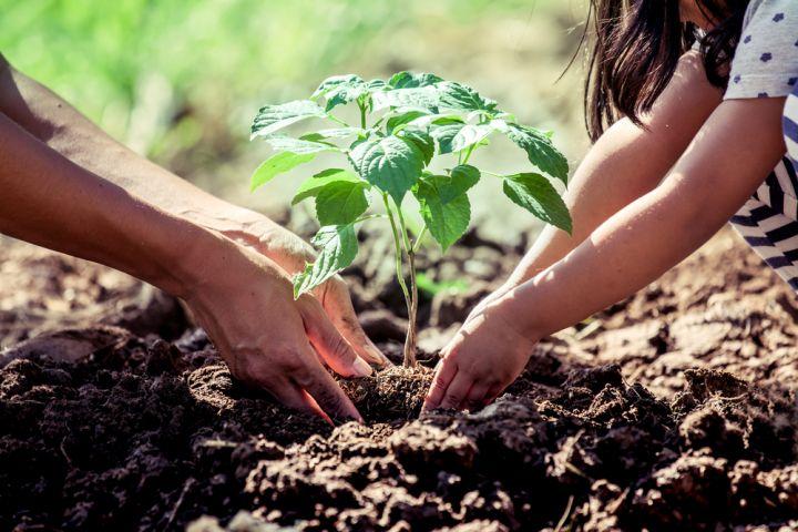 4 Pohon ini kaya manfaat ekonomi & lingkungan, terancam punah