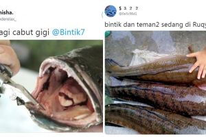 12 Cuitan lucu pakai ikan gabus ini bikin cengar-cengir sendiri