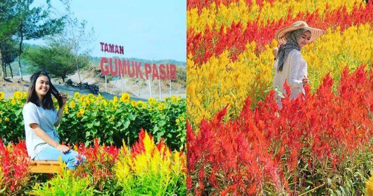 wisata pantai jogja terindah 16 Wisata Bunga Terindah Di Jogja Dan Jawa Tengah