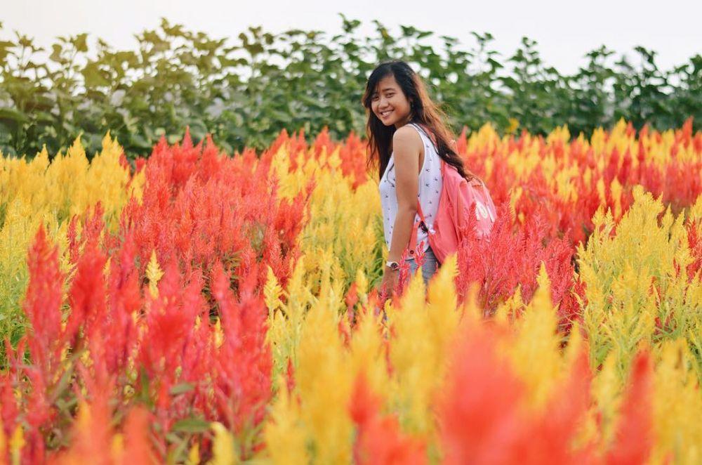 taman bunga Jogja dan Jawa Tengah instagram