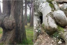 12 Pohon ini sekilas mirip tubuh, awas gagal fokus