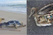 7 Kasus satwa laut makan sampah plastik paling mengenaskan