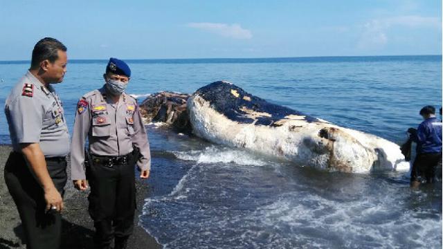 binatang mati karena plastik © berbagai sumber