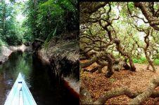 16 Hutan angker di dunia ini bikin merinding, enam dari Indonesia