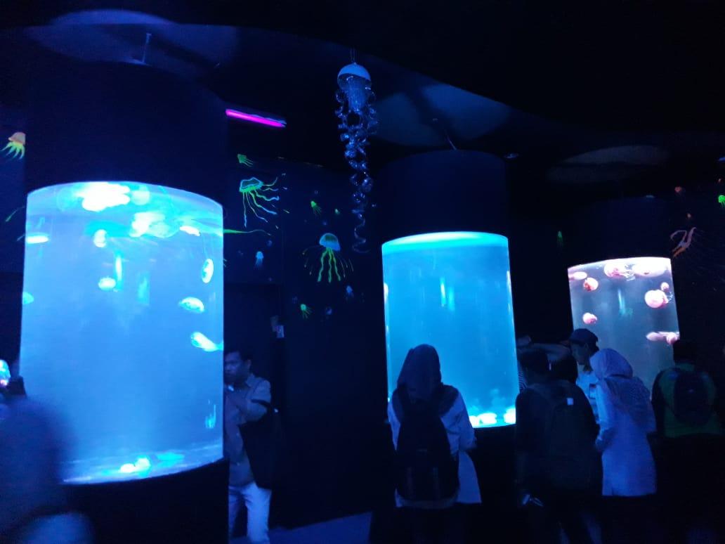 Liburan, SeaWorld Ancol buka 10 akuarium ubur-ubur aneka spesies