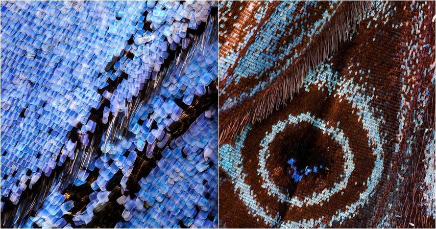15 Foto makro sayap kupu-kupu, indahnya bikin takjub