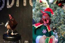 10 Foto ayam bertingkah bak manusia ini bikin gemas