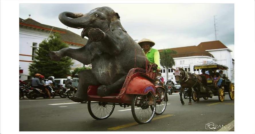 10 Foto editan gajah naik kendaraan ini bikin ketawa mules