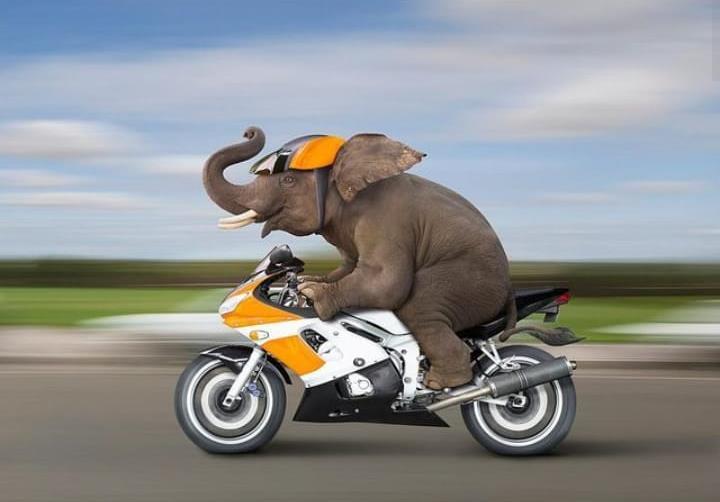 gajah naik kendaraan instagram