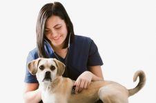Studi ini ungkap profesi dokter hewan lebih berpotensi bunuh diri