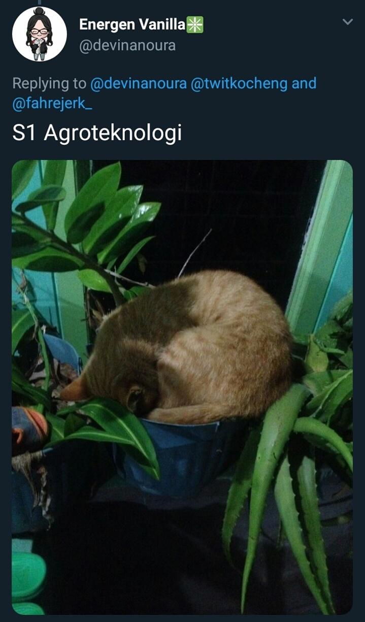 kucing kuliah © 2019 brilio.net