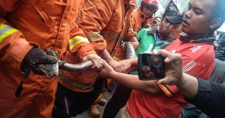 15 Sanca diamankan dari saluran air rumah warga