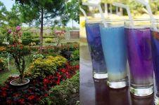 Intip kuliner unik serba biru di rumah makan nuansa taman