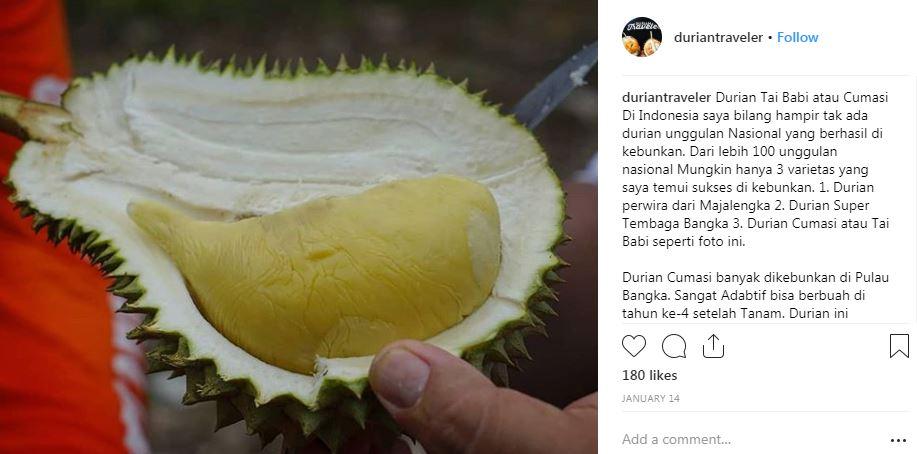 durian termahal  © 2019 brilio.net
