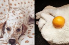 13 Potret perpaduan hewan dengan benda sekitar ini menipu mata