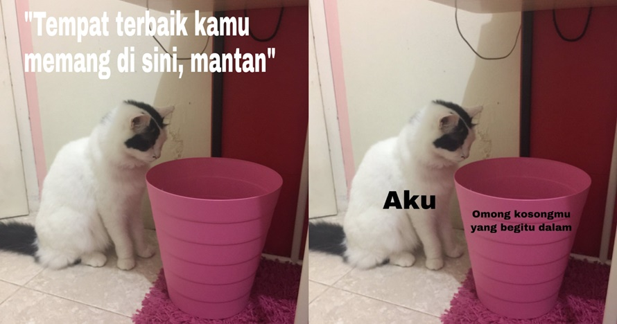 10 Meme lucu kucing menatap tong sampah ini bikin senyum sendiri