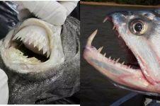 10 Hewan ini punya gigi sangat tajam dan gigitannya mematikan