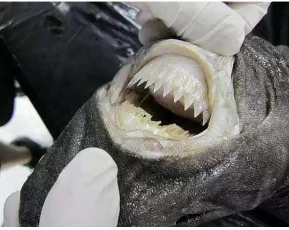 10 Hewan ini punya gigi sangat tajam © 2019 brilio.net