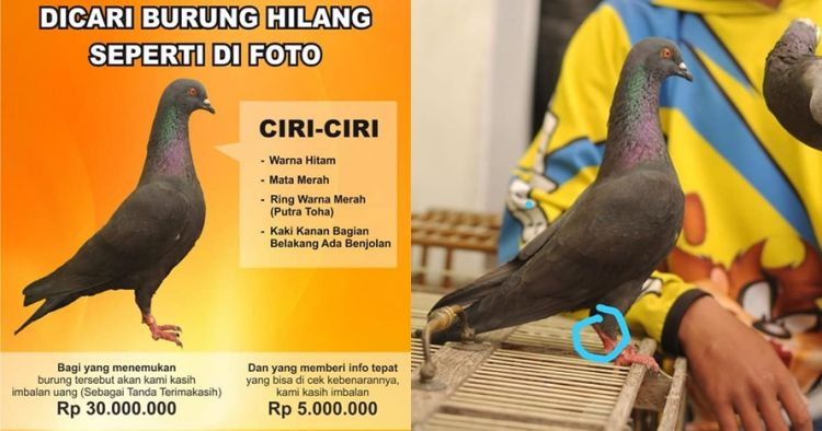 Cari burung hilang, pria ini janjikan hadiah Rp 30 juta