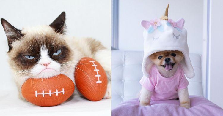11 Akun Instagram hewan ini punya follower di atas 1 juta