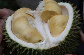 11 Manfaat kulit durian untuk kesehatan, dapat mengobati bisul