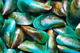 Manfaat kerang hijau untuk berbagai penyakit sendi