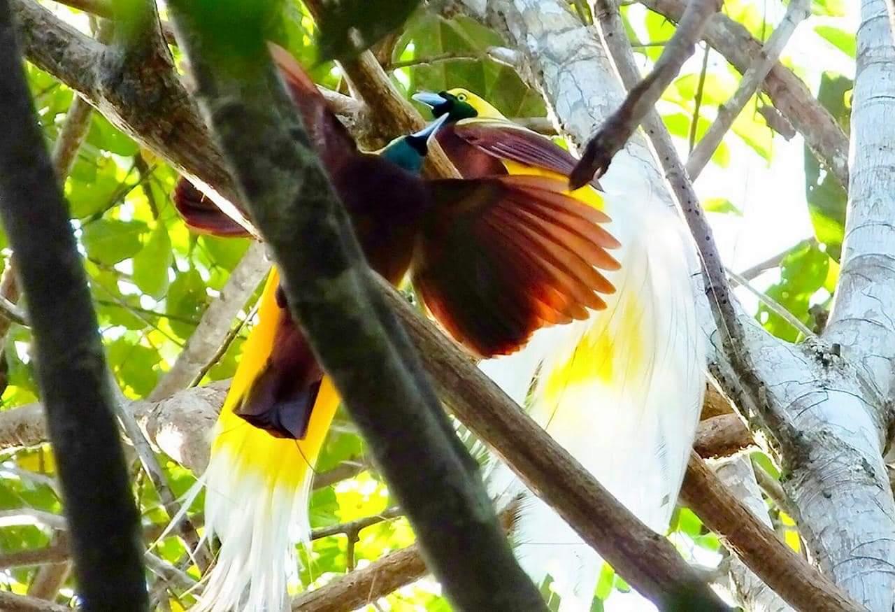 Wisata alam di Papua Barat ini suguhkan keindahan cenderawasih